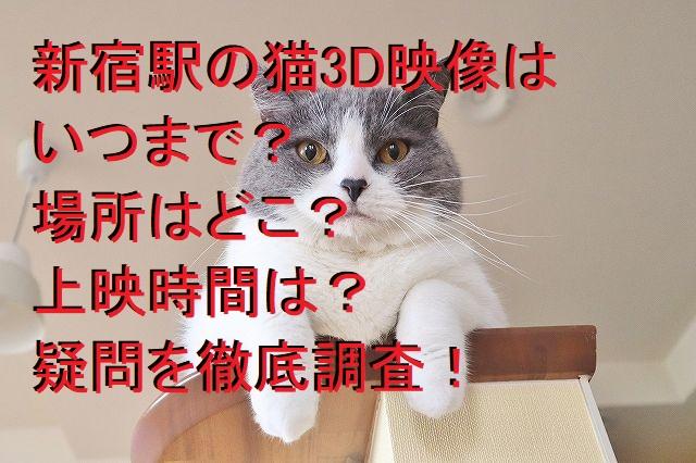 新宿駅の猫3D映像はいつまで?場所はどこ?上映時間は?疑問を調べてみた!